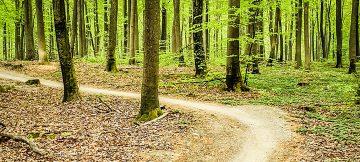 Hareskoven MTB mountainbike